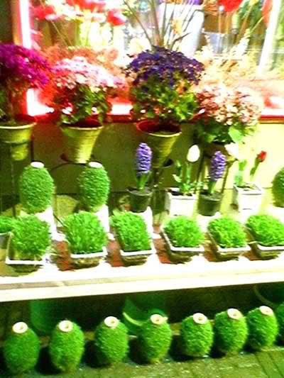 سبزه کنجد دکوراسیون - تزئینات و خانه داری - ترتیزک یا شاهی روی کوزه